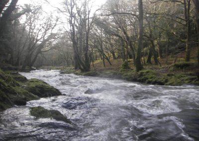2006_dartmoor_29