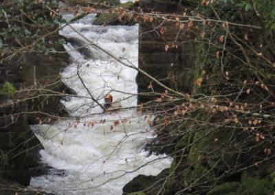 2014_Dartmoor_58
